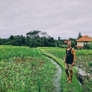 Рисовые поля. Бали